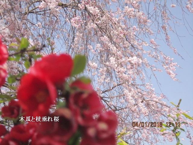 狭山市:tabikkoさんの画像