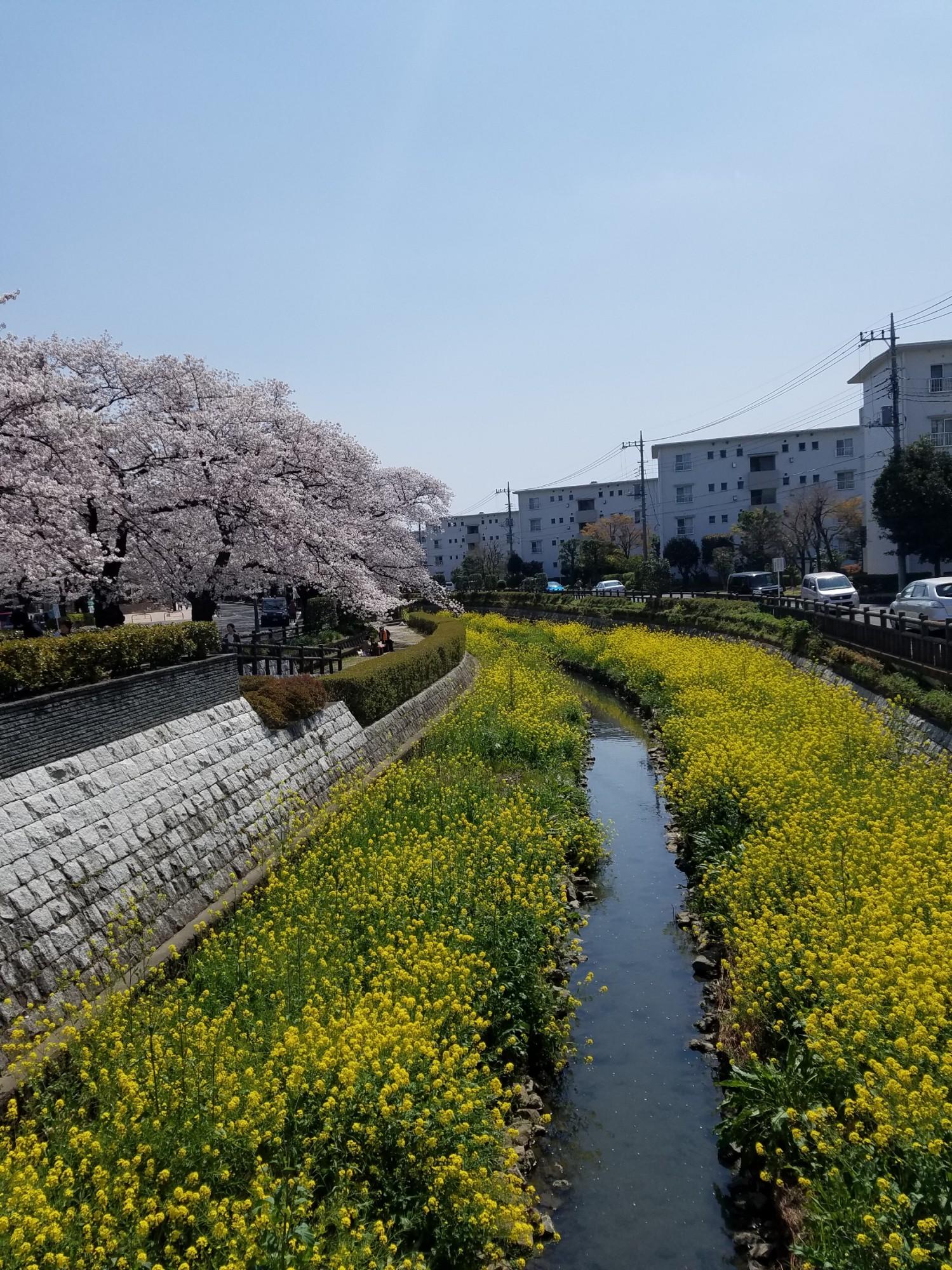 上尾市:みのるさんの画像
